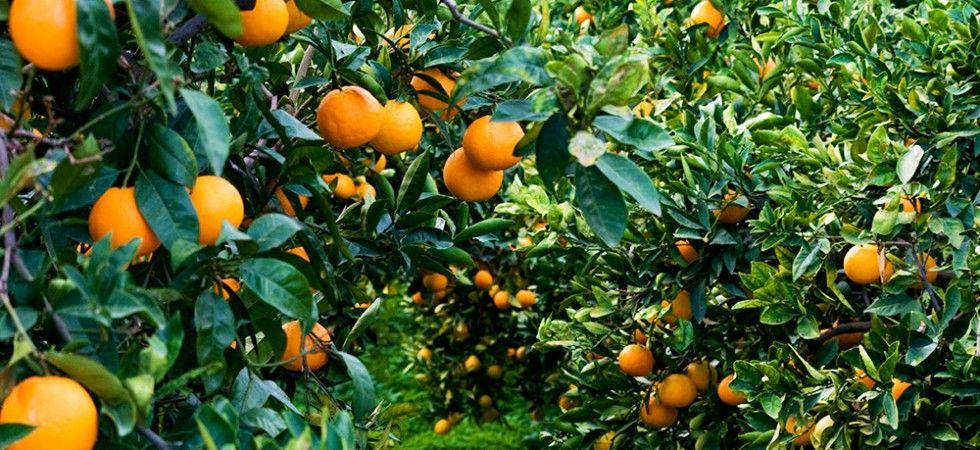 giardini-naxos-arance